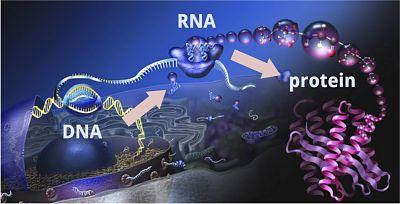 Cómo aprender ciencia: proteínas